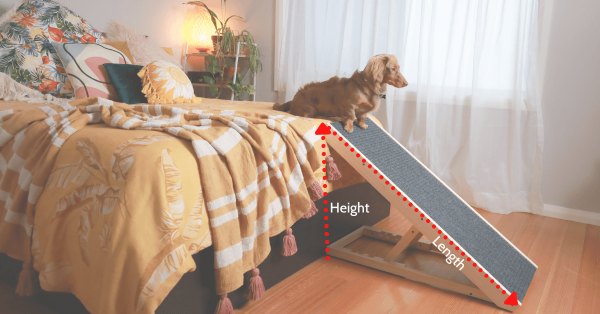 photo of a small furry dog on top of a ramp with measuring guide beside a yellow bed