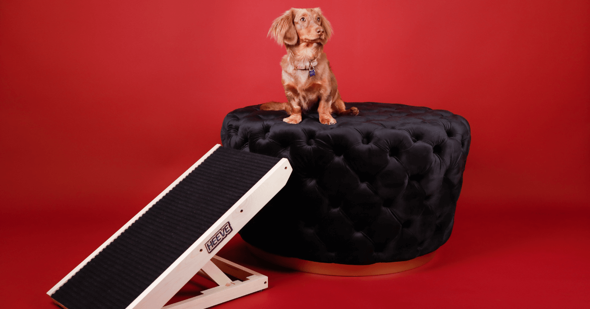 A Heeve 'Up-Ya-Get' Wooden Dog Ramp charcoal beside a small black dog sitting on a black velvet ottoman