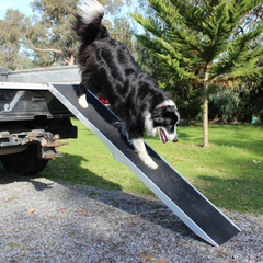 Image of Heeve 1.8m Folding Aluminium Dog Ramp
