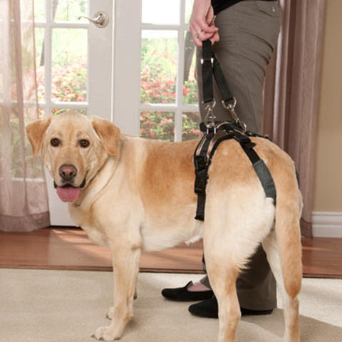 Solvit Medium Size Dog Lifting Aid - Rear Portion Only