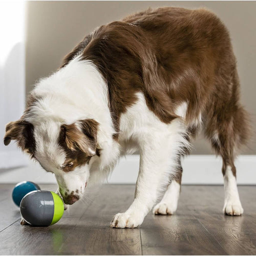 PetSafe® Ricochet Electronic Interactive Sound Dog Toys - PetSafe - Ramp Champ