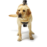 GoPro Fetch Dog Harness - B&C Camera - 2