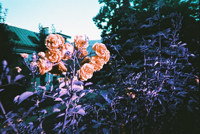 Lomography LomoChrome Purple 2019 Simple Use Film Camera
