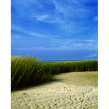 Promaster Scenic Backdrop 8' x 10' - Sea Grass by Promaster at bandccamera