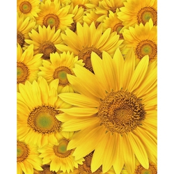 Promaster Scenic Backdrop 8' x 10' - Daisies by Promaster at B&C Camera