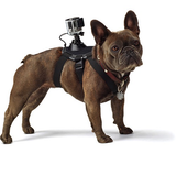 GoPro Fetch Dog Harness - B&C Camera - 3