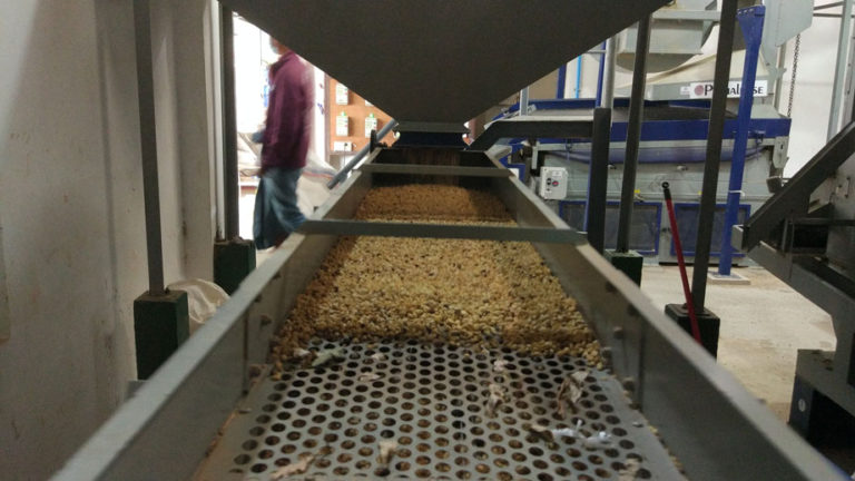 Ovalware specialty coffee equipment blog milling and exporting coffee cherry