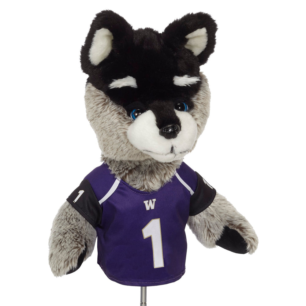 University of Washington Husky