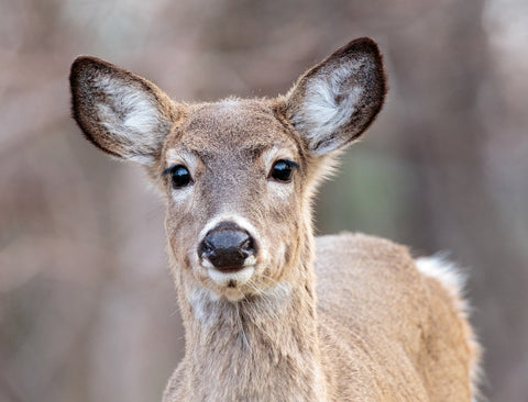 Pesticide Harms Deer Possibly Humans Deerbusters Canada