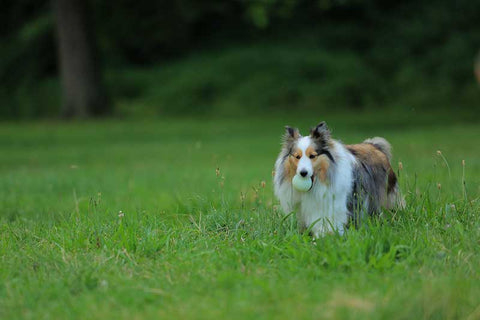 lyme disease prevention in dogs month deerbusters canada
