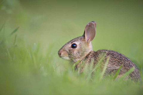 Best Fence For Rabbit Control Deerbusters Canada