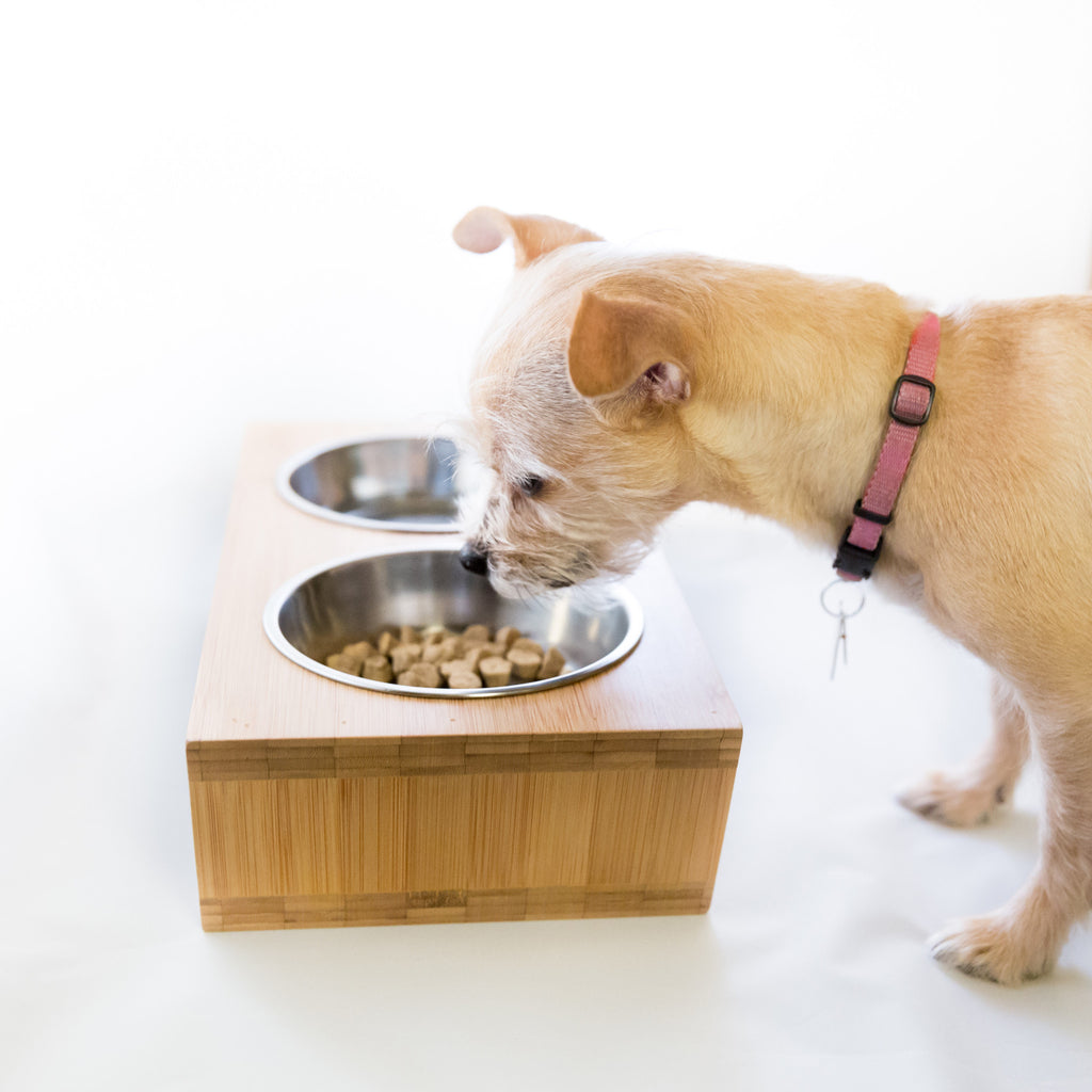 feed feeder n product en store petco pets petcostore shop elevated pet cat left s adjustable our