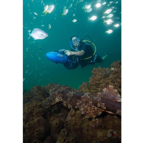 Underwater exploring with the Yamaha RDS250 Seascooter.  The user is riding the blue, black and grey by holding on to the handles.  She is in the water above a reef that has a chameleon fish on it and several fish are above her.  The Yamaha RDS 250 Sea Scooter can reach depths of 100ft.