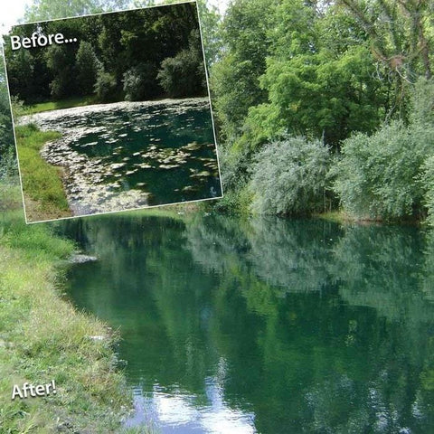 Before and After pictures of Pond Logic ClearPAC PLUS MuckAway being used in a pond.