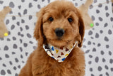 *RESERVED* Pauly Male Mini F1B Goldendoodle Puppy