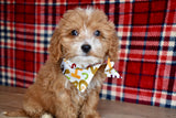 *RESERVED* Rooster Male F1B Cavapoo Puppy