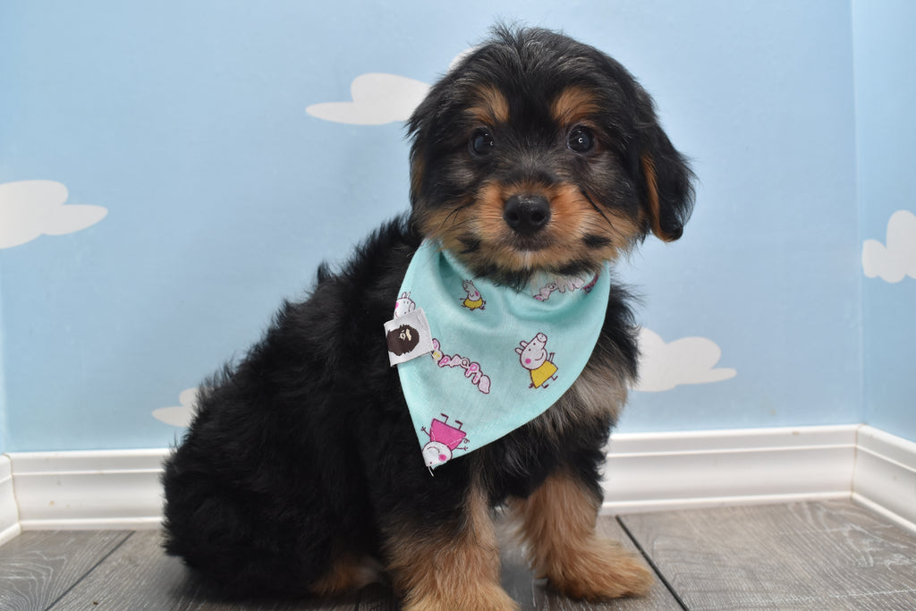 Puppies For Sale | Happytail Puppies NC | Home