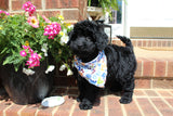 Riley Male Miniature Bernedoodle Puppy