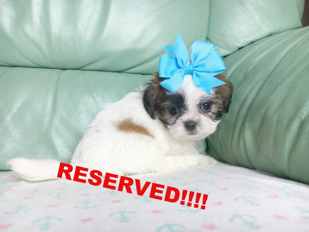 Happytail Puppies Happytail Puppies For Sale In North