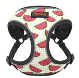 Sizzlin' Summer Harness with Retractable Leash