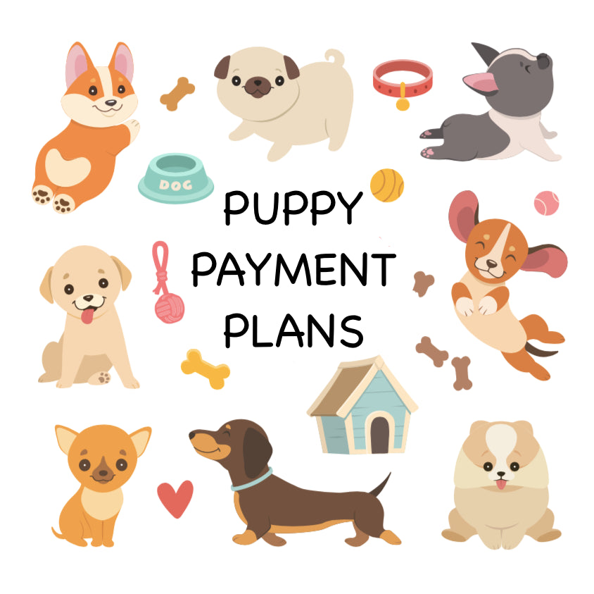 12-18 Month Payment Plan
