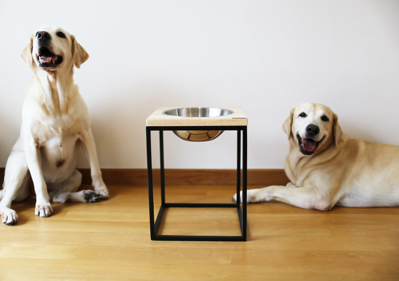Types of Pet Bowls