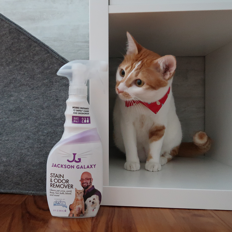 Jackson Galaxy's Stain and Odour Remover Review