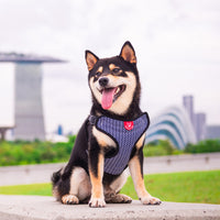 Gentle Pup Easy Harness - Mono Mike