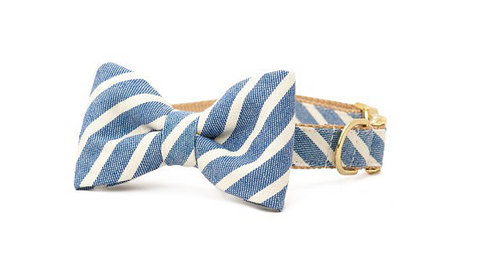 Pampurred Pets Denim Stripe Collar with Bow