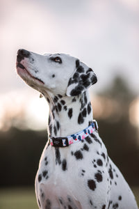 Gentle Pup Collar - Lovely Leia