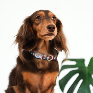 Gentle Pup Collar - Dashing Diamond