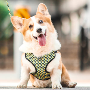 Gentle Pup Easy Harness - Zippy Zag