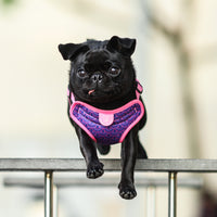 Gentle Pup Easy Harness - Piper Pink