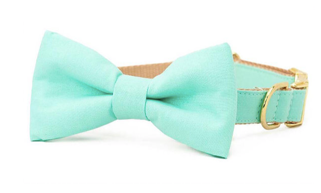 Pampurred Pets Turquoise Collar with Bow