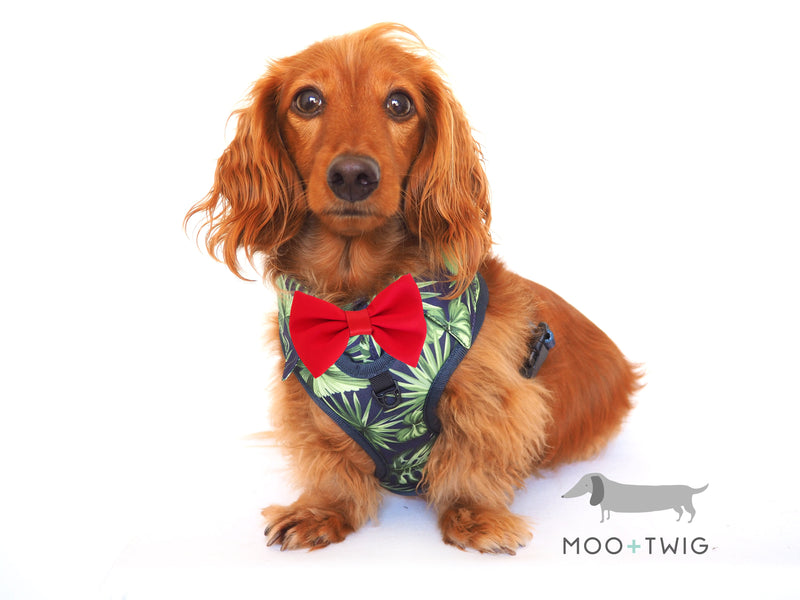 Moo + Twig Shirt Harness - Burneo Bliss