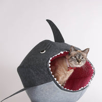 The Cat Ball in Great White Shark