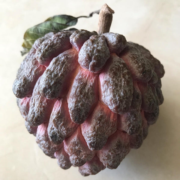 Sugar Apple ~ Sweetsop ~ Annona squamosa ~ Fruit Tree
