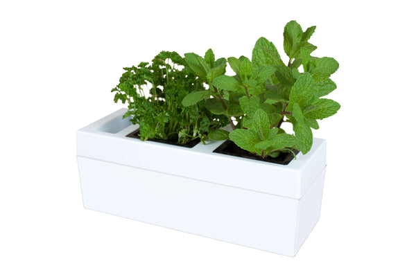 Greenlife Kitchen Herb Grower - 2 Pot - White