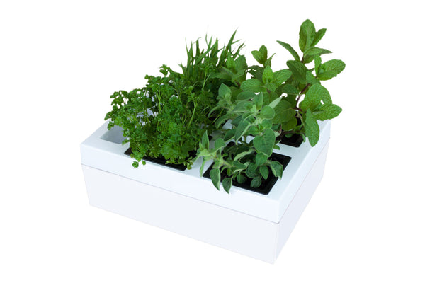 Greenlife Kitchen Herb Grower - 4 Pot - White