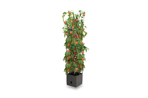 Greenlife Tomato Tower 3 Tier - 250 x 250 x 1200mm - Slate Grey