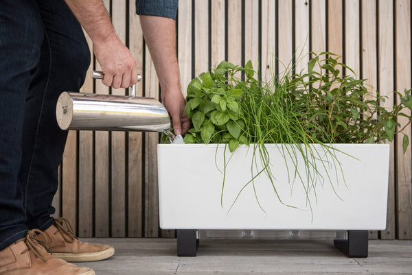 Glowpear Mini Bench Planter - Self Watering Raised Garden Planter