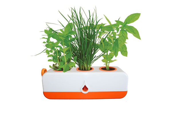 Kitchen Herb Grower - 320 x 100 x 100mm - Orange