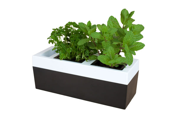 Greenlife Kitchen Herb Grower - 2 Pot - Black and White