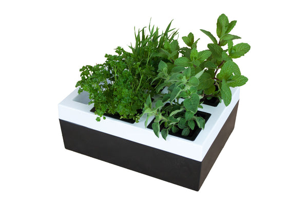 Greenlife Kitchen Herb Grower - 4 Pot - Black and White
