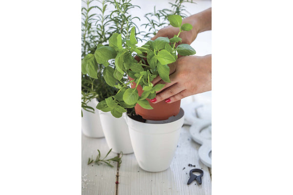 Keter Ivy Herb Planters x 2 - White