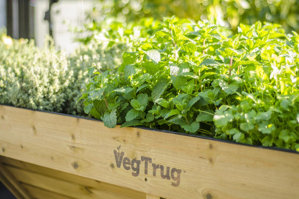 VegTrug Wooden Raised Planter Natural - Medium