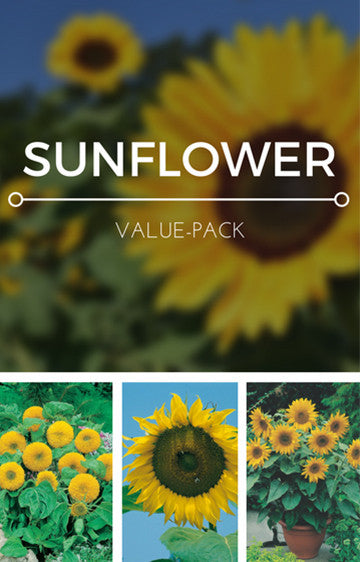 Sunflower 3-in-1 Seed Pack