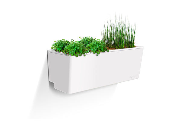 Glowpear Mini Wall Planter - Self Watering Vertical Garden Planter