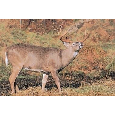 Delta Whitetail Deer 203