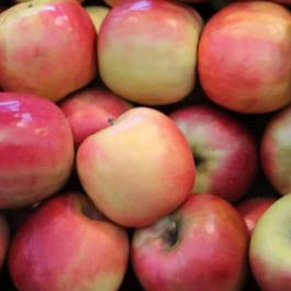 Apples - Pink Lady - medium (each) - Rosalie Gourmet Market